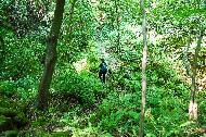 """<p>화산섬 제주의 대표 아이콘 &lsquo;오름' 에서 1년에 열흘만 열리는 비밀의 원시림을 만나다. 제주특별자치도 &lsquo;거문오름 비개방탐방로(용암길)&rsquo;<br>  <br>  7월 1일부터 코로나19 장기화로 지친 국민을 위로하고 어려움에 처한 국내 관광업의 내수를 활성화하기 위한 &lsquo;2020 특별 여행주간&rsquo;이 시작됐다. 이번 여행주간의 화두는 &lsquo;안전&rsquo;이다.<br>  <br>  이에 문화체육관광부는 특정 관광지에 사람이 몰리는 것을 막고 소규모 &lsquo;안전 &rsquo; 여행 문화를 확산하기 위해 그동안 한국관광공사가 발굴해 온 &lsquo;숨은 관광지&rsquo;를 모아 소개한다. 3밀(밀폐&middot;밀접 &middot;밀집)을 피할 수 있는 국내의 &lsquo;숨어있던 관광지&rsquo;를 사진으로 만나보자.<br>  <br>  * 위 사진에 대한 저작권은 한국관광공사에 있으므로 무단 사용을 금합니다.<br> <br> 사용 문의 : 한국관광공사 숨은관광지 담당자(033-738-3419)</p> <p style=""""text-align: right;"""">(사진 = 한국관광공사)</p>"""