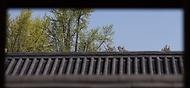 14일 문화재청 궁능유적본부와 한국문화재재단이 서울 경복궁에서 생과방을 열었다. 경복궁 생과방은 궁중병과와 약차를 체험하는 프로그램이다. 이날 방문객들은  경복궁 풍경 관람과 더불어 조선 시대 나인과 차비(궁중음식의 실무를 맡는 나인)의 접대를 받으며 조선왕조실록, 원행을묘정리의궤 등 기록을 토대로 만들어진 약차와 병과를 즐기고 있다.