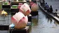 11일 서울 종로구 청계천에 석가탄신일을 앞두고 연등이 설치되어 점심시간 시민들이 주위를 둘러보고 휴식을 취하고 있다