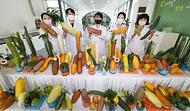 '오이 유전자원 현장 평가회'가 열린 24일 전북 전주시 농촌진흥청 농업유전자원센터에서 연구자들이 미국과 러시아 등 42개국에서 수집한 오이 447개 자원을 선보이고 있다.