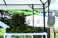 """산림청 국립수목원(원장 최영태)은 우리 꽃의 아름다움을 널리 알리기 위한 '제28회 우리 꽃 전시회'를 국립수목원 산림박물관 일대에서 15일부터 24일까지 개최한다. </br> </br> 오늘 진행된 개막식에서 공모전 시상이 진행되었으며, 우리 꽃 대상에는 분경분야 """"신에게는 아직 12척의 꽃배가∼""""가 대통령상과 상금 300만원, 미선나무상에는 사진분야 """"변산바람꽃""""이 국무총리상과 상금 200만원 등 모두 18명에게 상금 1,250만원이 주어졌다.</br>   (출처=국립수목원)"""