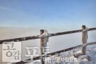 충북 단양과 경북 풍기 사이에 위치한 소백산 비로봉은 겨울 설산 트레킹의 성지로 꼽히고 있다. 겨울바람으로 함께 얼어버린 울타리.