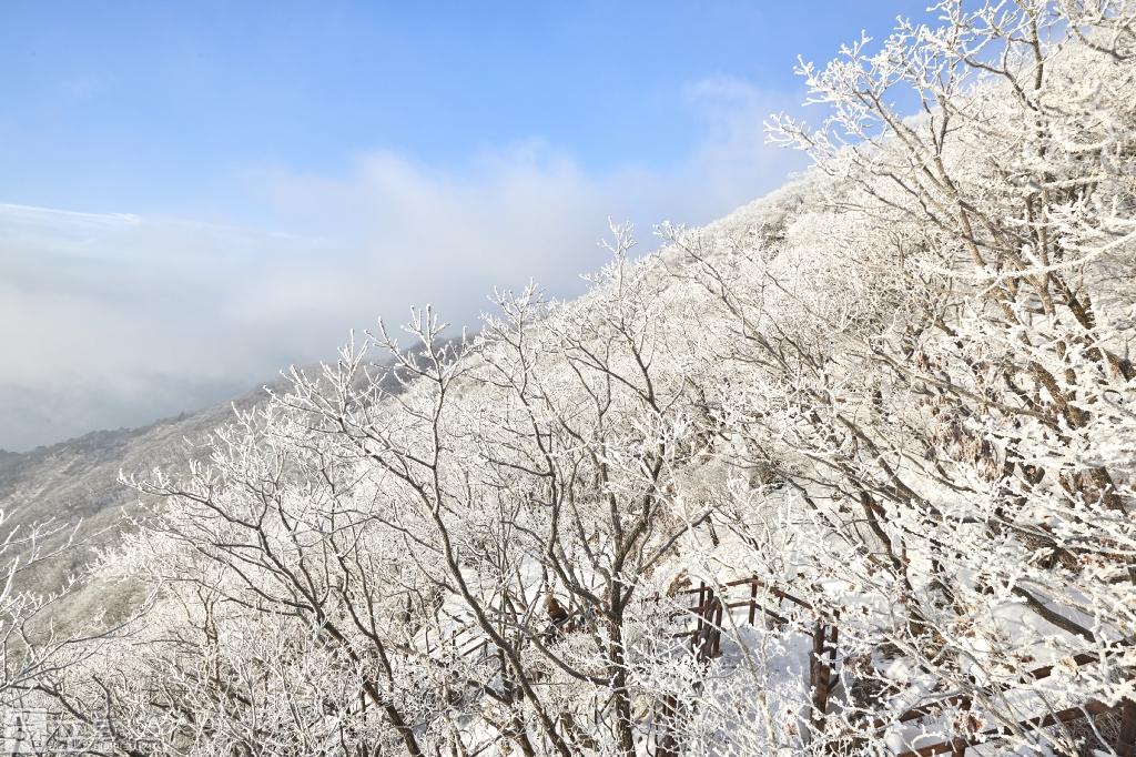 충북 단양과 경북 풍기 사이에 위치한 소백산 비로봉은 겨울 설산 트레킹의 성지로 꼽히고 있다. 산 중턱에서 본 눈꽃 핀 소백산의 모습.
