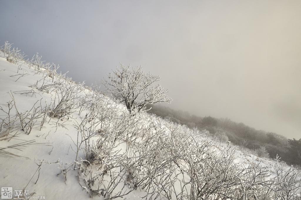 충북 단양과 경북 풍기 사이에 위치한 소백산 비로봉은 겨울 설산 트레킹의 성지로 꼽히고 있다. 소백산 등산을 하면 이런 눈꽃 풍경을 다양하게 볼 수 있다.