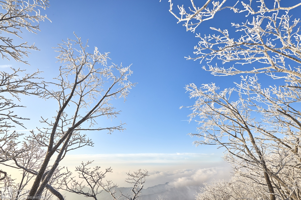 충북 단양과 경북 풍기 사이에 위치한 소백산 비로봉은 겨울 설산 트레킹의 성지로 꼽히고 있다. 등산로를 오르면 나무마다 핀 눈꽃을 보면서 걸을 수 있다.