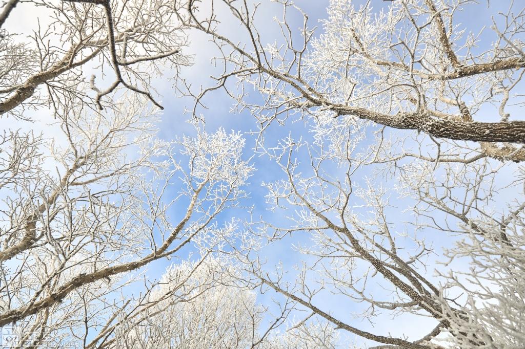 충북 단양과 경북 풍기 사이에 위치한 소백산 비로봉은 겨울 설산 트레킹의 성지로 꼽히고 있다. 겨울나무에 핀 눈꽃과 푸른 하늘의 조화가 청명하고 아름답다.