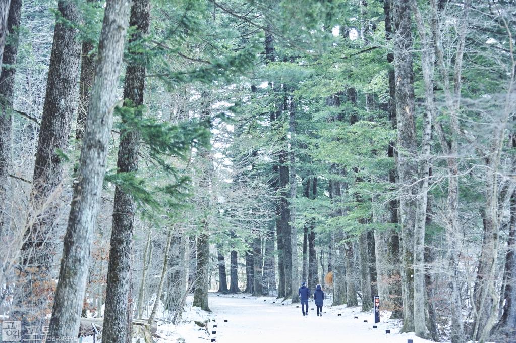 강원도 평창군 진부면에 위치한 오대산 월정사 초입 일주문부터 금강교까지 1km 구간은 전나무 숲길이다. 이 전나무 숲은 처음 아홉 그루의 수령 5백 년 된 전나무들이 새끼를 쳐 오늘처럼 우거졌다고 한다. 피톤치드 삼림욕의  보고이며, 최근 종영된 드라마 '도깨비'의 촬영 장소로 나와 관광객들에게 더욱 인기를 얻고 있다.<br/> <br/>    - 대한민국 테마여행 10선 '평창로드' (1일차 코스)