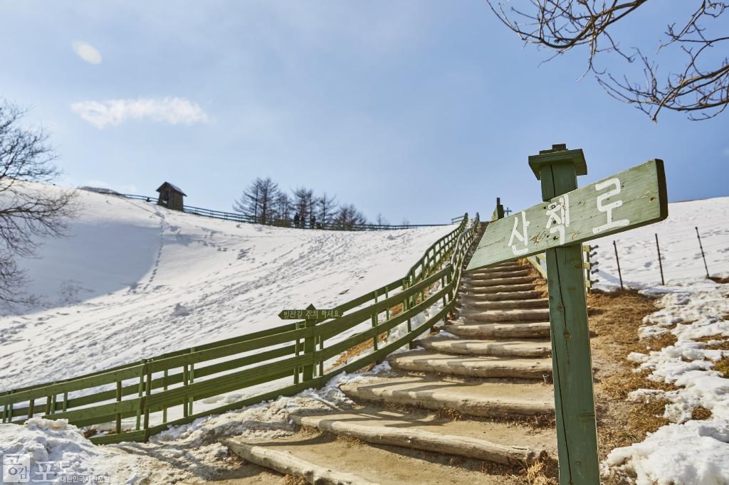 강원도 평창군 대관령면에 위치한 대관령 양떼목장의 산책로를 따라 오르면 눈이 덮여 설국으로 변한 대관령의 광활한 풍광을 감상할 수 있다. <br/> <br/>   - 대한민국 테마여행 10선 '평창로드' (1일차 코스)