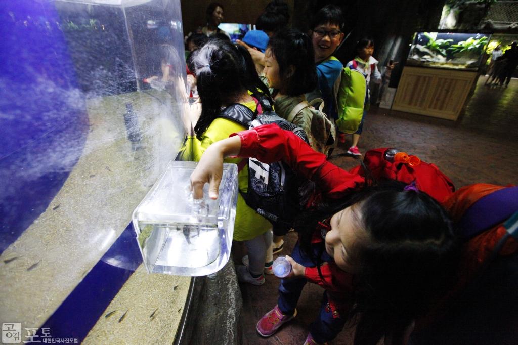 여수 아쿠아플라넷은 친환경 아쿠아리움을 통해 세계적인 해양생물을 만날 수 있는 해양생태관이다. 아쿠아플라넷을 찾은 아이가 수조 속 물고기를 살펴보고 있다. <br/> <br/> -대한민국 테마여행 10선 '남도바닷길' : 여수