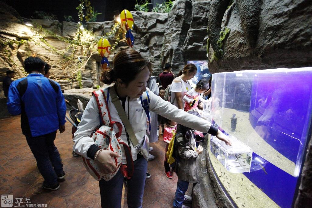 여수 아쿠아플라넷은 친환경 아쿠아리움을 통해 세계적인 해양생물을 만날 수 있는 해양생태관이다. 아쿠아플라넷을 찾은 관람객이 수조 속 물고기를 살펴보고 있다. <br/> <br/> -대한민국 테마여행 10선 '남도바닷길' : 여수