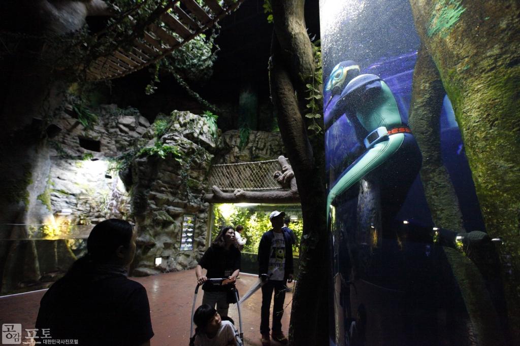 여수 아쿠아플라넷은 친환경 아쿠아리움을 통해 세계적인 해양생물을 만날 수 있는 해양생태관이다. 관람객들이 물속 아쿠아리스트를 바라보고 있다.<br/> <br/> -대한민국 테마여행 10선 '남도바닷길' : 여수