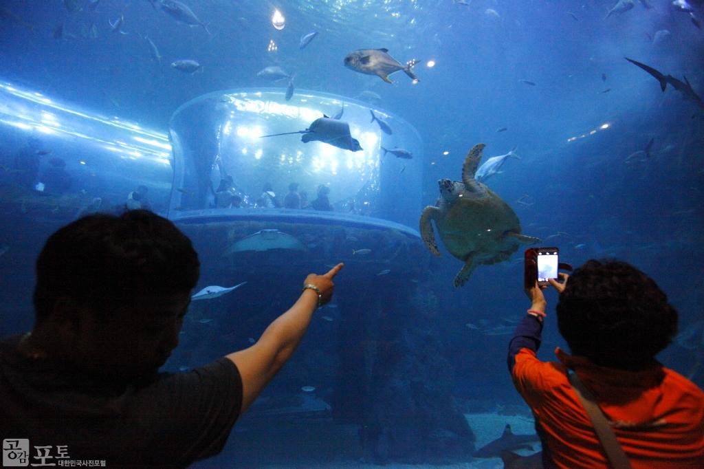 여수 아쿠아플라넷은 친환경 아쿠아리움을 통해 세계적인 해양생물을 만날 수 있는 해양생태관이다. 아쿠아플라넷을 찾은 아이가 거북이 사진을 찍고 있다. <br/> <br/> -대한민국 테마여행 10선 '남도바닷길' : 여수