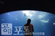 여수 아쿠아플라넷. 친환경 아쿠아리움을 통해 세계적인 해양생물을 만날 수 있는 해양생태관이다. 한 관람객이 하얀 돌고래 벨루가를 바라보고 있다. <br/> <br/> -대한민국 테마여행 10선 '남도바닷길' : 여수