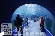 여수 아쿠아플라넷은 친환경 아쿠아리움을 통해 세계적인 해양생물을 만날 수 있는 해양생태관이다. 사람들이 수조 터널에서 다양한 해양생물을 관람하고 있다. <br/> <br/> -대한민국 테마여행 10선 '남도바닷길' : 여수