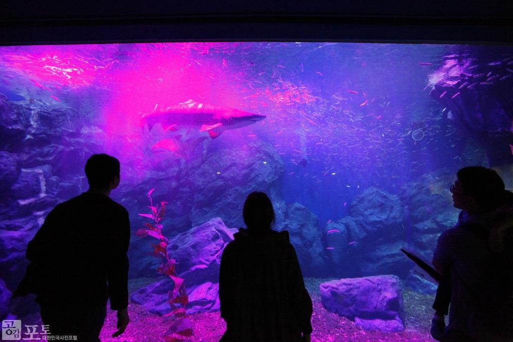 여수 아쿠아플라넷은 친환경 아쿠아리움을 통해 세계적인 해양생물을 만날 수 있는 해양생태관이다. 사람들이 커다란 수조 안의 다양한 해양생물을 관람하고 있다. <br/> <br/> -대한민국 테마여행 10선 '남도바닷길' : 여수