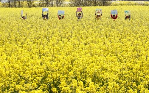 노란 유채꽃밭에서 내가 그린 그림 뽐내요