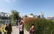 서울로7017, 파란 가을