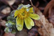 봄맞이 하는 봄꽃