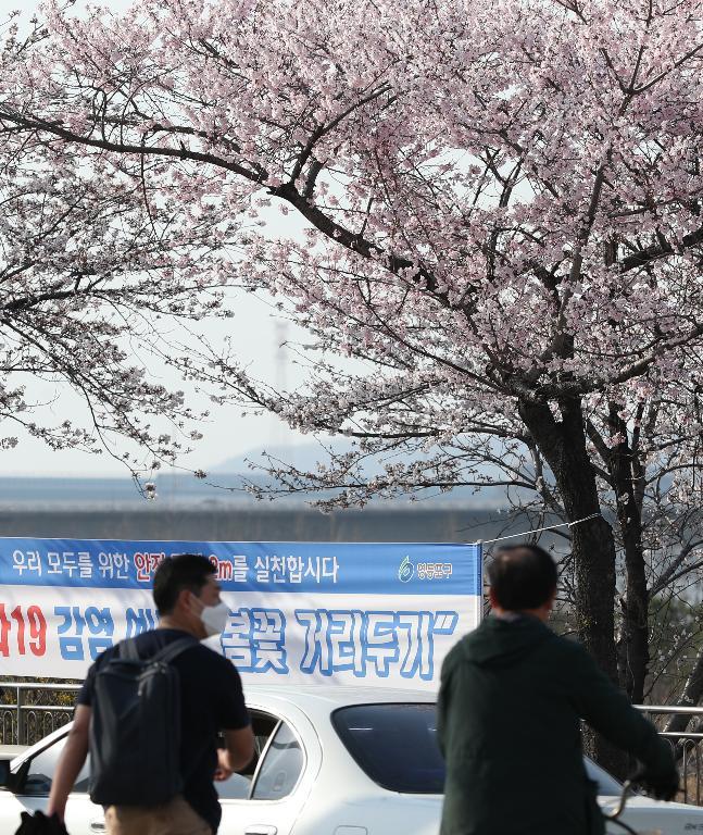 29일 휴일 오후 서울 여의도 국회 뒤편에 4월 2일부터 여의도 벚꽃 길 보행로를 전면 통제한다는 현수막이 걸려 있다. 이날 여의도를 찾은 시민들이 봄 햇살을 받으며 벚꽃 길을 걷고 있다.