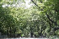 21일 서울 용산구 남산 전망대에서 바라 본 도심이 5월의 신록으로 물들어 있다.