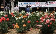 서울 송파구 올림픽공원 남1문에 위치한 장미광장에 한국개량종 및 외래종 160여 종의 다양한 장미가 활짝 피어 오후 광장을 찾은 시민들이 마스트 착용과 거리두기를 하며 구경하고 있다.