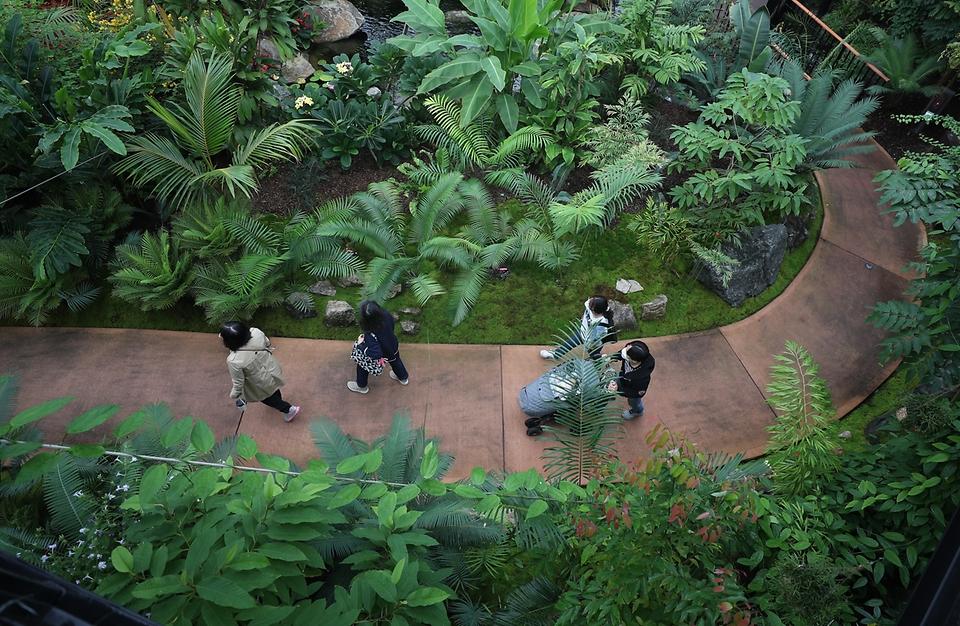 지난주 토요일 개원한 세종시 국립세종수목원이 시범운영을 하는 가운데 관람객들이 코로나19 확산 방지를 위해 열 체크와 거리두기를 하며 열대온실 및 야외에 다양한 식물들을 관람하고 있다. 이날 점심시간을 이용해 실내 공간 손잡이 및 명부작성대 등 관람객들의 손이 자주 가는 곳을 수목원 방역 관계자가 꼼꼼히 소독했다.