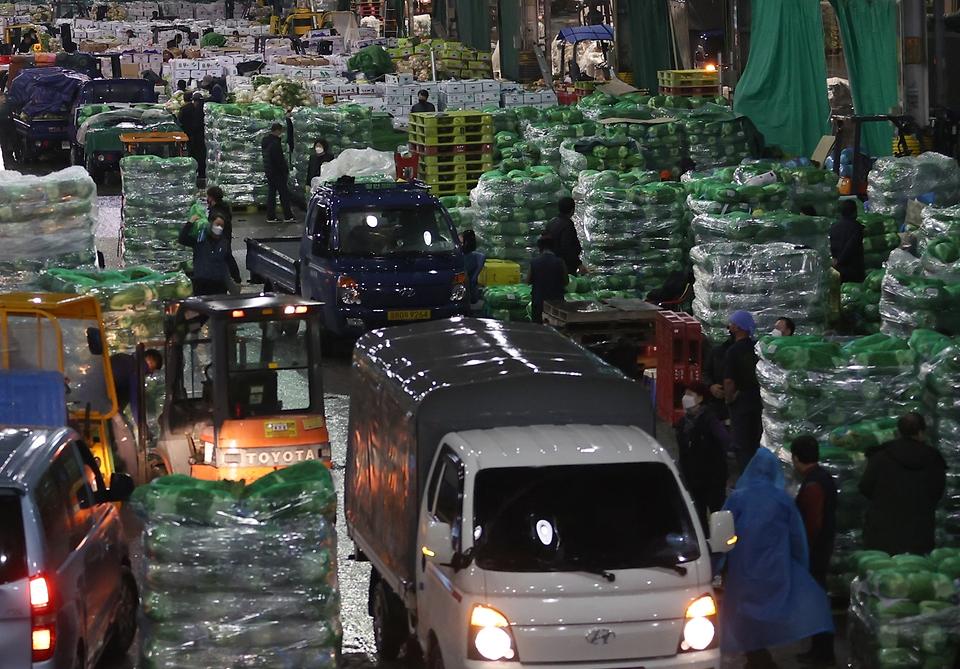 19일 새벽 서울 송파구 가락농수산물종합도매시장에서 각 지역에서 올라 온 배추들이 도착하자마자 경매를 기다리며 정리되고 있다.