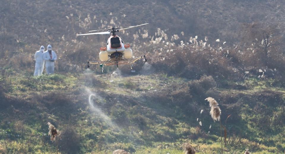 농림축산식품부가 26일 충북 청주시 미호천에서 방제 차량 및 인력이 닿지 않는 지역에 무인 방제헬기를 이용한 조류인플루엔자(AI) 방제활동을 하고 있다.