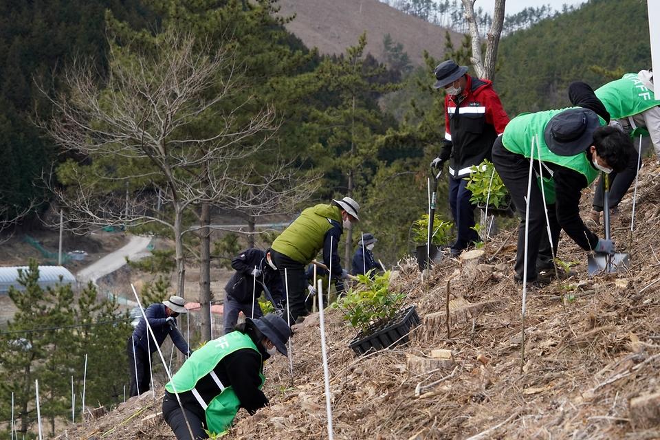 24일 경남 거제시 연초면에서 '2050 탄소중립 선언' 달성을 위한 2021년 첫 나무 심기 행사에 참석한 산림청 직원, 거제시 주민 등이 붉가시나무를 심고 있다.