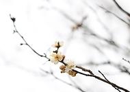 4일 경칩을 하루 앞두고 찾아간 강동구 길동생태공원 연못에는 개구리알이 올챙이가 되기 위해 세포분열을 하고 복수초, 버들강아지 등 봄을 알리는 꽃들이 피어오르고 있다.