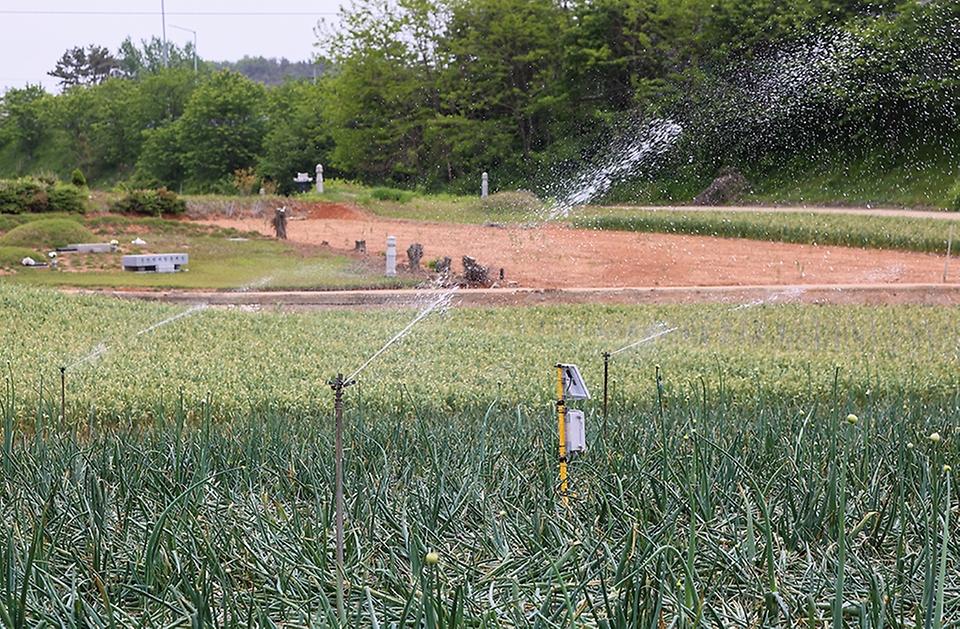 6일 전남 무안군 양파 농가에서 자동 급수가 진행되고 있다.
