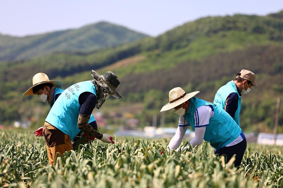 농림축산식품부 본부 및 17개 소속·산하기관 임직원 3,300여명은 6월말까지 노지채소 수확, 과수 적과작업, 폐기된 영농자재 수거 등의 작업에 자발적으로 동참할 예정이다.