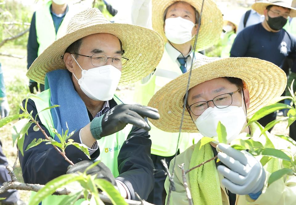 박범계 법무부장관이 복숭아 농장에서 사회봉사명령 집행 현장점검 및 농촌 일손돕기 봉사활동을 벌이고 있다.