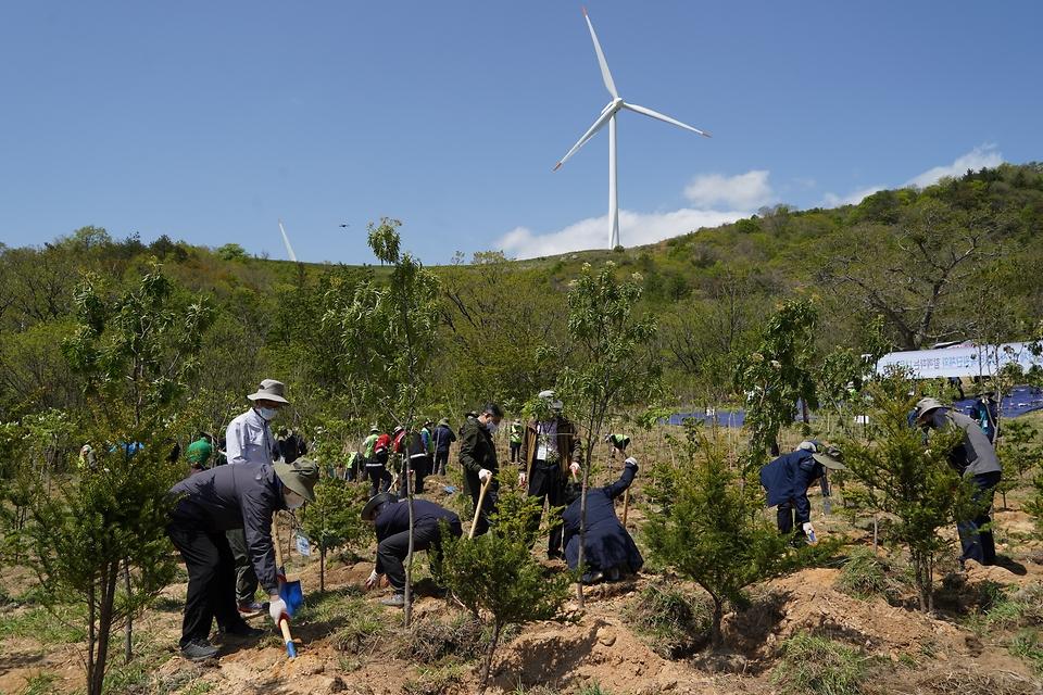 최병암 산림청장이 13일 탄소흡수원 확충을 위해 강원도 평창군 백두대간 대관령에서 환경단체 및 산림생태복원단체와 나무를 심고 있다.
