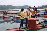 고수온 대비 양식어업 현장 점검