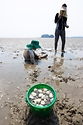 '한국의 갯벌'을 체험하다. 사진 6
