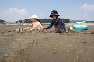 '한국의 갯벌'을 체험하다. 사진 8