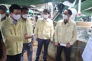 부산지역 양식어가의 고수온 대응 매뉴얼 이행사황 점검
