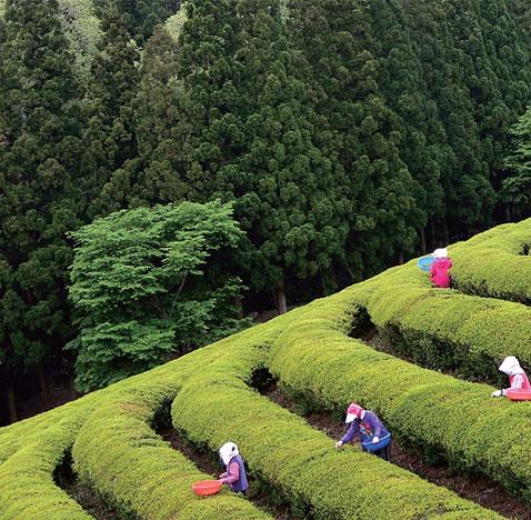 대한민국 방방곡곡, 행복한 봄 여행