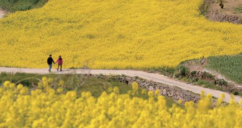2018 봄 걷기 여행 축제_전국 방방곡곡 봄을 보러 가요