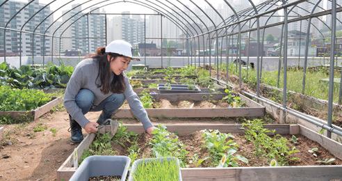 '파절이'의 공동경작구역 도시인 농사 본능 깨우다
