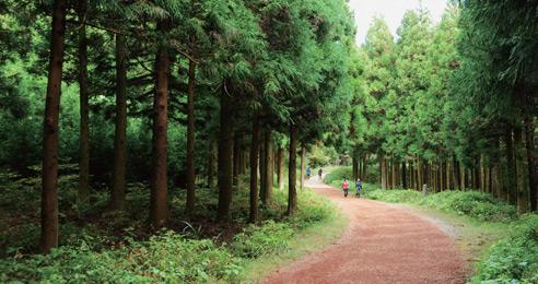 초록빛 에너지 넘치는 명품 숲
