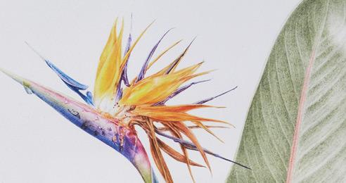 보태니컬 아트, 식물 그림이 예술이네