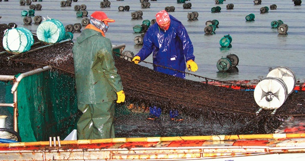 김, 수산물 수출 1위 진도 바다의 보물