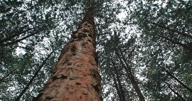 식물·식이·운동 치유… 숲에 건강 있다