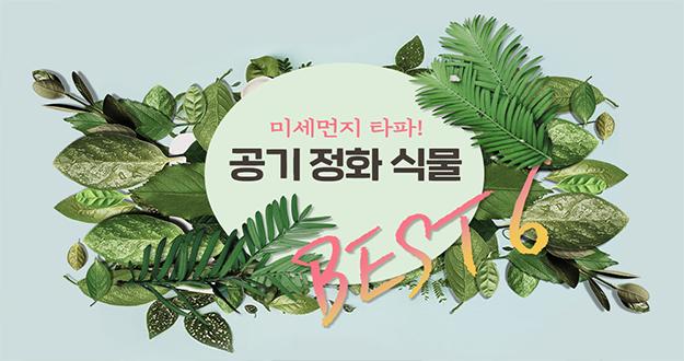 공기 정화 식물 BEST 6