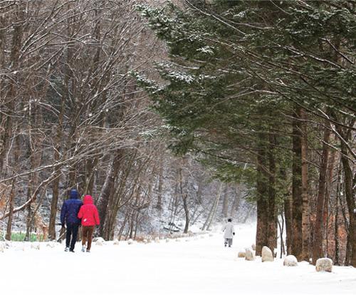 오대산 월정사 가는길 전나무 숲길