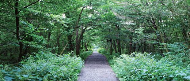 제주 사려니숲길