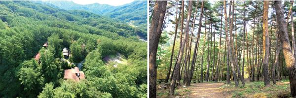 산림청은 7월 1일부터 산음자연휴양림(오른쪽)과 검마산자연휴양림(왼쪽) 등 2곳을 반려견과 동반 입장·숙박할 수 있도록 허용했다.