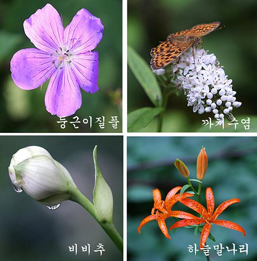 분주령에서 만난 여름꽃.